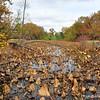 Lichterman Nature Center<br />  Memphis, TN 38119