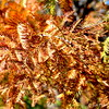 FALL FOLIAGE <br /> <br /> Can you spot the bumble bee?<br /> <br /> LICHTERMAN NATURE CENTER<br /> Memphis, TN