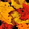 Colors of Fall,