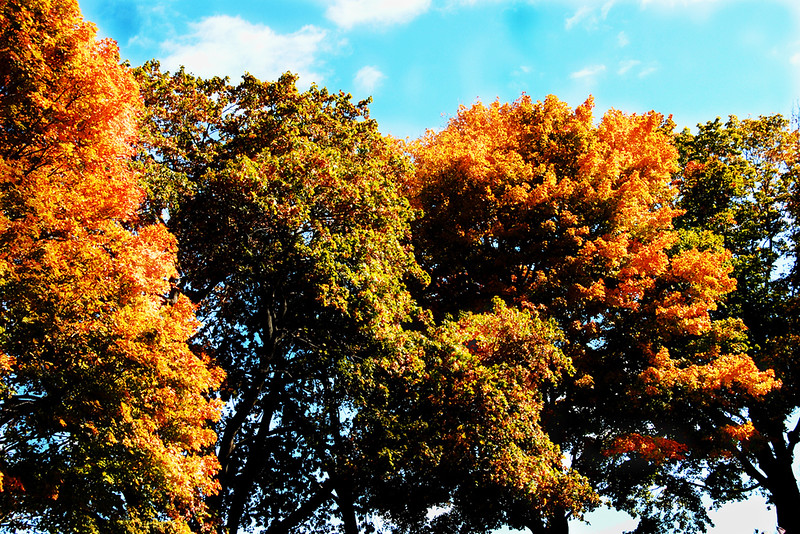 Tree Tops COLOR9