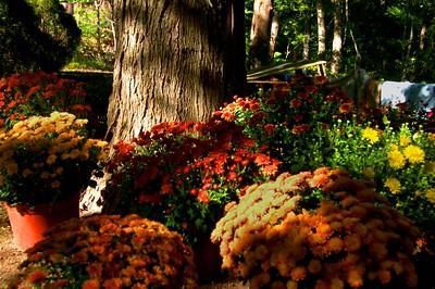 100  Autumn