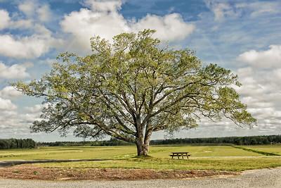 Tree of Life, Carver MA