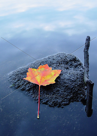 """Zen"" - a peaceful autumn moment from Maine."