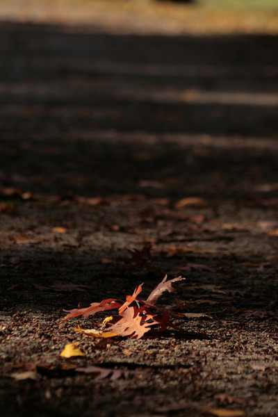Fall leaves at Fall at Lindenwood Cemetery