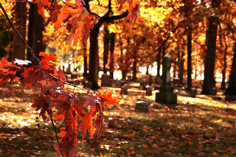 Fall leaves at Lindenwood Cemetery
