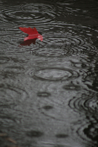 Fall Leaf in the rain.