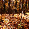 Fall leaves at Pokagon State Park