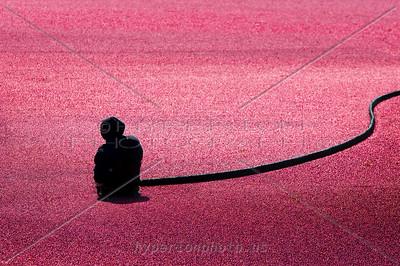 Harvest Silhouette