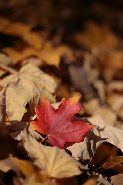 Fall at Shoaff Park