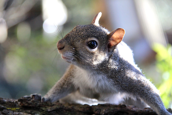 Up Close with a Squirrel