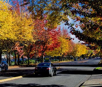 """Autumn Drive"""
