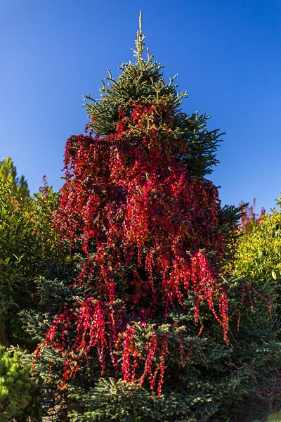 """Autumn Christmas Tree"""