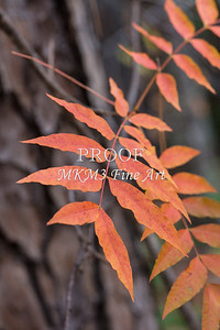 Fall Color 5528 07