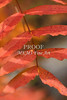 Fall Color 5528 08