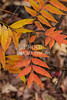 Fall Color 5528 03
