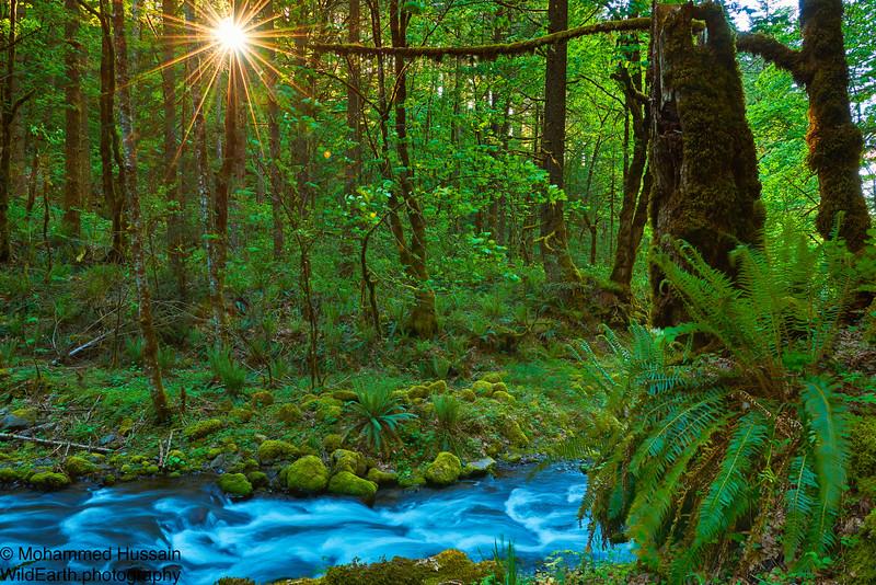 Gorton Creek Sunset, Columbia River Gorge, OR