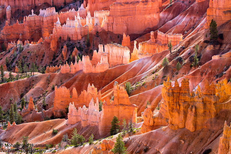 Hoodoos -  Bryce Canyon National Park, UT