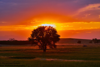 Colorado Summer Sunset-Rocky Mountain Arsenal National Wildlife Refuge, CO.