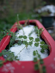 Snow and plants
