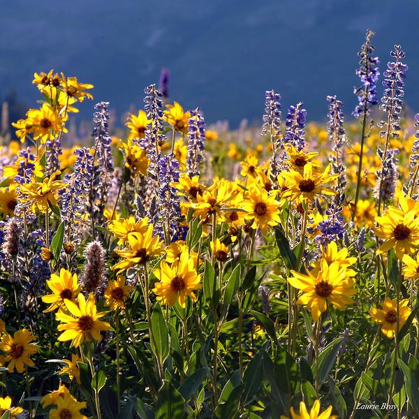 yellow wildflowers C