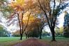 autumn_2012_015