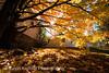 Autumn2_20161023_008