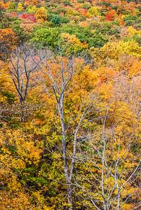 Colorful Leaves on Hillside