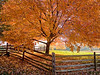 """Autumn Shade""<br /> A colorful  Autumn scene in Holmdel, New Jersey."