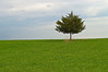 """One Tree""<br /> <br /> A single pine tree in a field of bright green grass contrasted against an overcast sky."