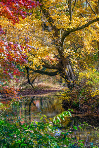 Autumn Creek in the Woods
