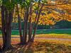 Sunlight on Autumn Leaves