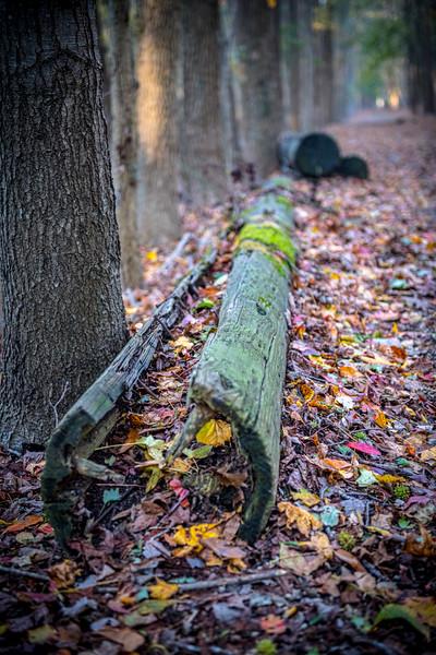 Hollow Fall