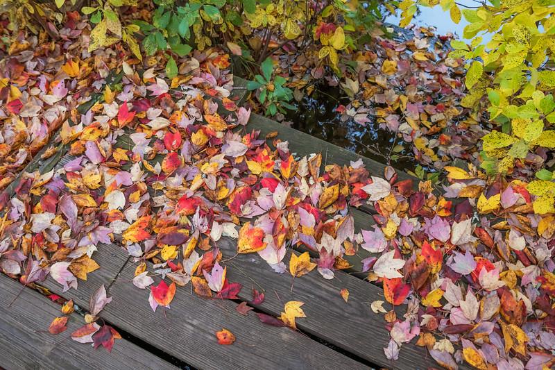 Autumn Leaves on Dock