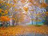 Autumn Halloween Trail