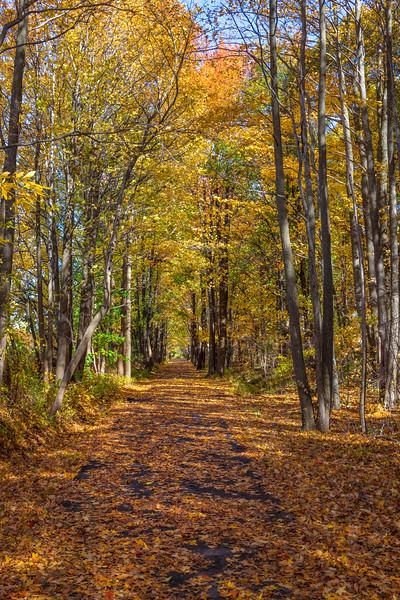 Henry Hudson Trail