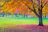 Vibrant Autumn Park