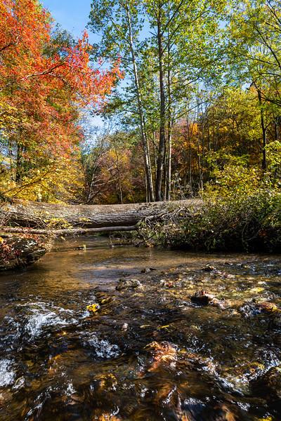 Tree Stump in Creek