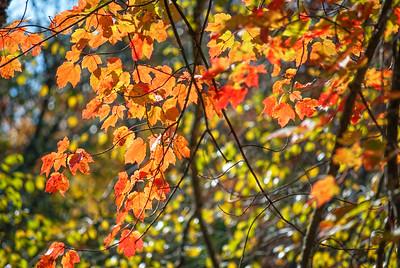 Backlit Autumn Branch  Autumn Branch