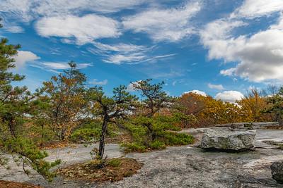 Mountaintop Pines