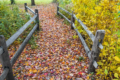 Trail of Leaves
