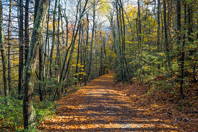 Carpeted Trail
