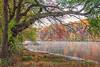 Fog on Millhurst Pond