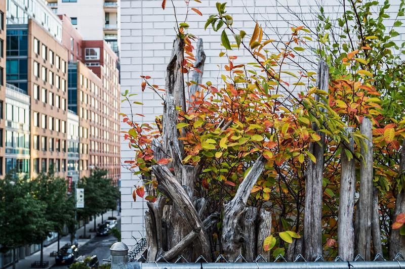 High Line Autumn Color