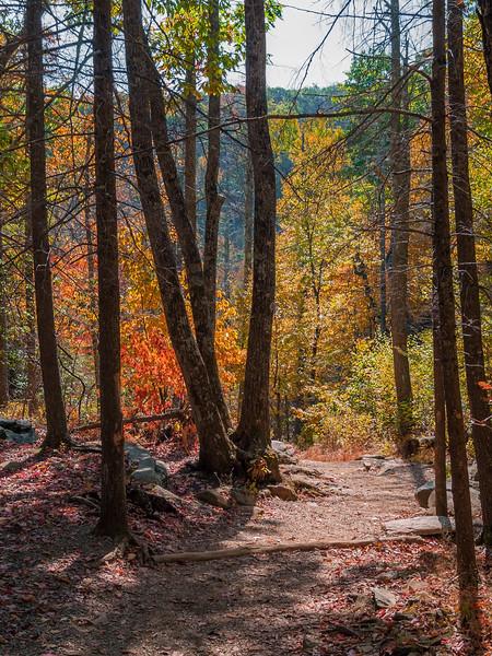 Sunny Autumn Trail