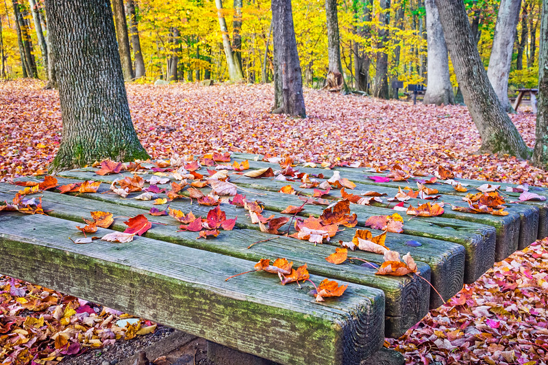 Fallen Leaves on Table