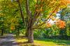 Autumn Shade Trees