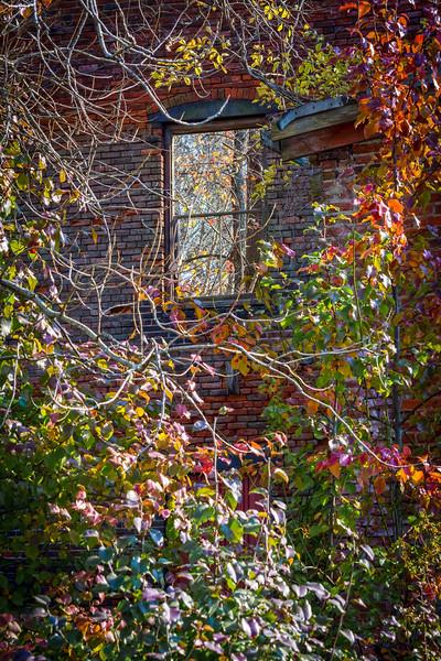 Abandoned Autumn