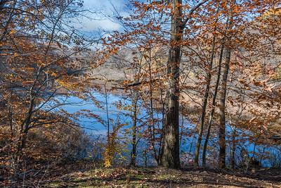 Lake Thru Woods