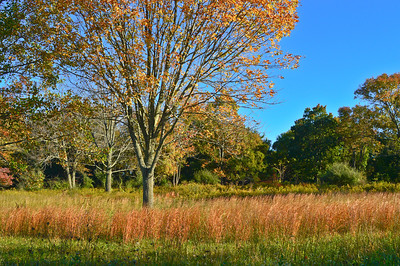 """""""Morning Autumn Field""""  An Autumn field with colorful grasses and changing leaves in Central New Jersey."""