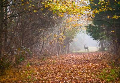 """""""Deer Path"""""""